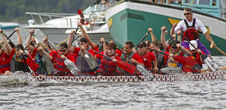 Dragon boat red team races. SAINT JOHN, CANADA - AUGUST 28: A team competes at the Saint John Dragon Boat Festival, a fundraising project of St. Joseph's Royalty Free Stock Images