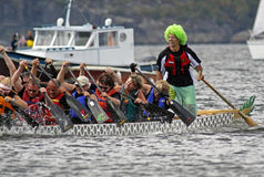 Dragon boat sweep steers green wig. SAINT JOHN, CANADA - AUGUST 28: A sweep (steersman) in a green wig steers his boat at the Saint John Dragon Boat Festival, a Stock Photos
