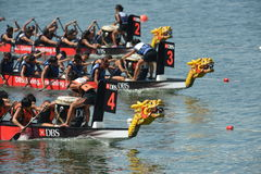 Dragon boats racing to finish DBS river Regatta 2013 Royalty Free Stock Photo