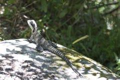 Dragon d'eau images libres de droits