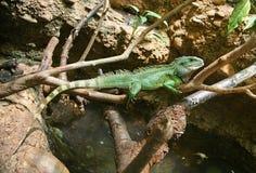 Dragon d'eau de Chineese 3 Photo libre de droits