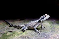 Dragon d'eau oriental Image libre de droits