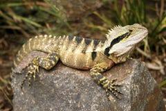 Dragon d'eau oriental Photographie stock libre de droits