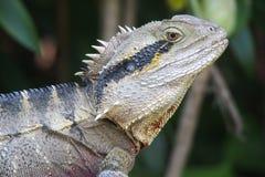 Dragon d'eau oriental Photos libres de droits
