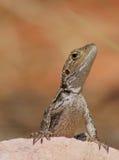 Dragon de Jacky Images libres de droits