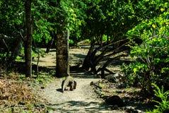Dragon de Komodo Photos libres de droits