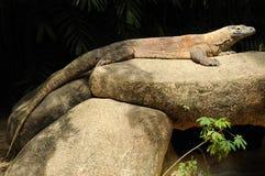 Dragon de Komodo dans le zoo de Singapour. Photo libre de droits