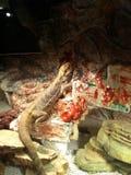 Dragon de Magestic Images stock