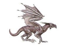 dragon de vampire d'imagination du rendu 3D sur le blanc Image stock