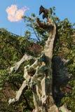 Dragon de Wawel images libres de droits