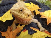 Dragon Enjoying Fall Royalty-vrije Stock Afbeelding