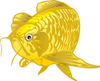 Dragon Fish. Vector Gold fish scales clean the tail and clean the sides. A blond A vector images Can cut sticker Royalty Free Stock Image