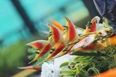 Dragon Flower royalty-vrije stock afbeeldingen