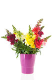 Dragon flowers in purple vase Stock Photo