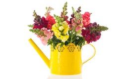 Dragon flowers in purple vase Royalty Free Stock Photo