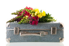 Dragon flowers on vintage suitcase Stock Images