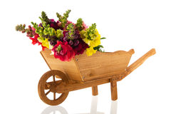 Dragon flowers in wheel barrow Stock Image