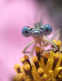 Dragon fly ...(1). Here is a dragon fly on a flower stock photography