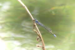 Dragon Fly Stockfoto