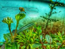 Dragon Fly stock afbeeldingen