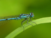 Dragon fly. Close-up of dragon fly sitting on a leaf stock photo