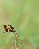 Dragon Fly photo libre de droits