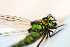 Dragon Fly Photographie stock