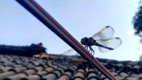 Dragon Fly Royalty-vrije Stock Afbeelding