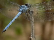 Dragon Fly stockfotos