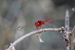 Dragon Fly Fotos de archivo libres de regalías