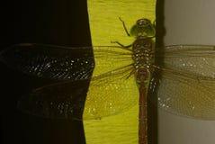 Dragon Fly Imagens de Stock Royalty Free