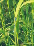 Dragon fly. Blue black dragon fly Royalty Free Stock Photos