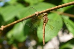 Dragon fly on green plant stock photos
