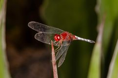 Dragon fly stock image