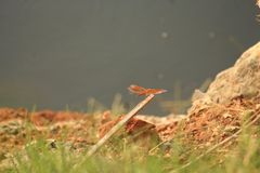 Dragon fly resting in a safe place stock photography