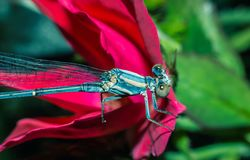 Dragon Fly. Sat on a Flower on a windy day Stock Photo