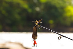 Dragon fly sitting on tip of a fishing rod. Dragon fly sitting perched on tip of a fishing rod Royalty Free Stock Photos