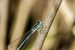 Dragon-Fly. A small dragonfly takes sunbathing Royalty Free Stock Images