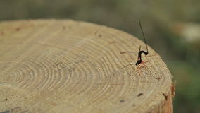 Dragon fly on stump stock video footage