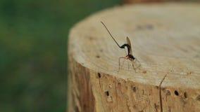 Dragon fly on stump stock video
