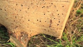 Dragon fly on stump stock footage