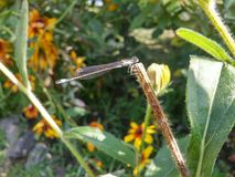 Dragon-fly. Summer nice Stock Images