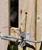 Dragon Fly sur la barrière avec le verrou en métal Photographie stock