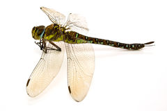 Dragon-fly in a type Stock Photography