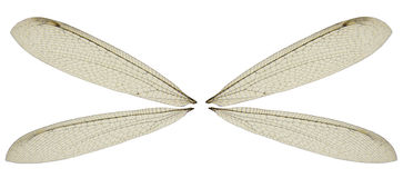 Dragon Fly Wings Stock Image