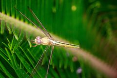 Dragon Fly image stock