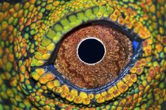 Dragon Forest Eye Close Up imagens de stock royalty free