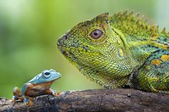 Dragon Forest and Flying Frog. Face to face on tree Royalty Free Stock Image