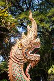 Dragon in front of the temple. Thailand Royalty Free Stock Photo