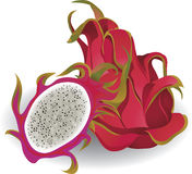 Dragon fruit. Whole and sliced. Vector illustration Stock Images